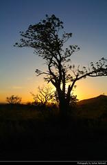 Sunset, Hluhluwe-iMfolozi National Park, South Africa (JH_1982) Tags: hluhluweimfolozipark hluhluwe imfolozi park national nationalpark np pn parque nacional parc nazionale 赫卢赫卢韦–印姆弗鲁兹公园 landscape nature scenery scenic silhouette silhouettes tree trees sky evening sun glow sunset ocaso sonnenuntergang coucherdesoleil pôrdosol tramonto закат zonsondergang zachódsłońca solnedgång solnedgang auringonlasku apus залез matahariterbenam mặttrờilặn 日落 日没 غروب kwazulunatal kwazulu natal south africa rsa za südafrika sudáfrica afrique sud sudafrica 南非 南アフリカ共和国 남아프리카 공화국 южноафриканская республика جنوب أفريقيا game reserve parco