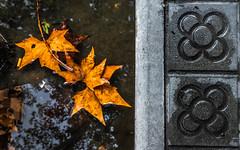 Tardor d'aigua, primavera de pedra (Ramon InMar) Tags: barcelona tardor autumn leaves fulles pluja rain