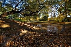 rich autumn colors (rafasmm) Tags: autumn outdoor color trees tree water leaf yellow green łódź lodz poland polska źródliska park nikon d90 sigma 1020 ex walk