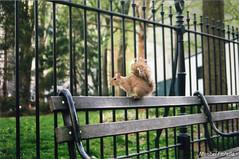 (maribelfiorella) Tags: analogue analogphoto outside streetphoto photographer 35mm 35mmphoto animals animalove animallove friends