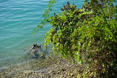 Petit Port @ Annecy-le-Vieux (*_*) Tags: annecylevieux annecy hautesavoie france 74 europe savoie september 2018 summer été petitport lake lakeannecy lacdannecy lac