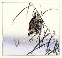 Common snipe (Japanese Flower and Bird Art) Tags: bird common snipe gallinago scolopacidae seiko nihonga woodblock print japan japanese art readercollection
