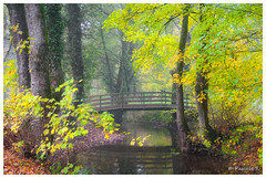 Automne romantique (Pascale_seg) Tags: landscape paysage automne autumn forêt forest moselle lorraine grandest france nikon pont pontdebois romantique romantisme romantic tree feuilles leaves ruisseau mist misty brume brumeux nature natura bosco earth terre terra nebbia woods