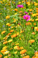 DSC_09866p (bromand) Tags: flower deutschland germany outdoor nikon d90 nikond90 105mmf28 sigma105mmmf28 geotagger solmeta solmetan1 geotaggersolmetan1