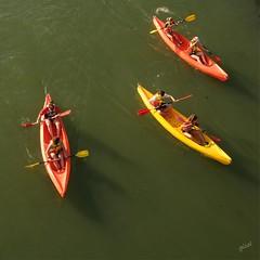 leisure time (gicol) Tags: canoa fiume river rio guadalquivir leisure sport sevilla siviglia spain andalucia