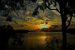 Blue gum (Dreaming of the Sea) Tags: sunset gold goldensunset gimp nikond7200 tamronsp2470mmf28divcusd burnettriver bundaberg queensland australia gumtrees clouds bluesky manipulation