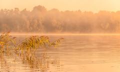 Golden morning (christianviktorsson) Tags: canon 50d 1022mm lake rengen rängen sunrise linköping östergötland sweden water dimma sjö vass bestorp calm fog