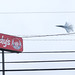 Wings, Wires, and Wendys  F-18 Turn Left at  Wendy's