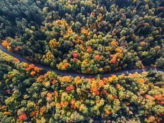 Forest Road (free3yourmind) Tags: forest road above view down aerial xiaomi mi drone 4k quadcopter autumn belarus minsk trees colorful