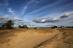 Kootwijkerzand (Bert#) Tags: netherlands kootwijk kootwijkerzand sand dunes nature trees blue sky travel hike