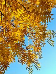 Осенние краски. Autumn colors. (agakaandrew) Tags: минск беларусь осень небо sky autumn belarus minsk листья leaf природа nature