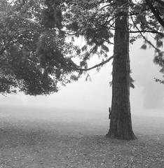 Eichhörnchen (photon_de) Tags: fog dusk mist morning light atmosphere squirrel tree trees böblingen see nebel blackandwhite bw park