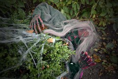 Happy Halloween (nickym6274) Tags: twycrosszoo twycross zoo atherstone leicestershire halloween spooky witch spiderweb