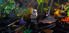 I'm officially lost. (Lego_LUTs) Tags: yellow red purple green takodana blue storm trooper star wars war lego outdoors clone troopers first order blasters afol minifigs minifigures bricks blocks canon toy toys force legos t3i republic people photoadd atst death rogue one dirt practical effects orange 60mm darth maul battlefront tree 7th sky corps snow road captain rex commander cody bike animal macro