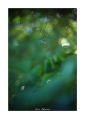 2018/8/25 - 6/27 photo by shin ikegami. - SONY ILCE‑7M2 / 七工匠  7artisans 50mm f1.1 (shin ikegami) Tags: sky 空 macro マクロ 井の頭公園 吉祥寺 summer 夏 asia sony ilce7m2 sonyilce7m2 a7ii 50mm 七工匠 7artisans 7artisans50mmf11 tokyo photo photographer 単焦点 iso800 ndfilter light shadow 自然 nature 玉ボケ bokeh depthoffield naturephotography art photography japan earth