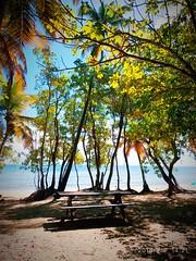Salines (Kristou Softy) Tags: martinique plage soleil antilles westindies vacances sun sea sable bonheur