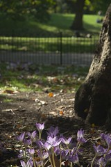 Autumn violet (dwimagesolutions) Tags: england london stjamespark violet autumn indiansummer nikond200 zoomnikkor1870mmf3545