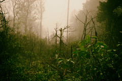 Lost (JuliSonne) Tags: fog greenhell mood thrill sky creepy forest