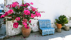 Pink flowers of summer Cyprus in ceramic vase near a navy bench on the white wall background of residental house (ABglavin) Tags: background beautiful bench bloom blooming blossom blue bougainvillea branch bright ceramic color colorful cyprus decoration design europe famous flora floral flower fresh gardening greece green growing holiday home leaf leaves mediterranean natural nature navy petal pink plant red sea summer sunny texture tourism travel tropical vacation vase vibrant wall white