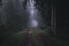 Fall into Autumn - I/V (der_peste (on/off)) Tags: fall autumn autumnal dark creepy haunted lurky sombre forest forestpath forestscape trees woods mist fog foggy misty