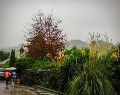 Umbrella Weather (Colormaniac too - Many thanks for your visits!) Tags: luss scotland travel rain rainyday umbrellas autumn walkinginrain landscape colorful netartll hss topazstudio distressedtextures