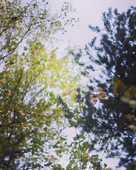 Mitt favorittak 💛💚💙💛💚 (magdalenasandberg) Tags: fs180930 fotosöndag fotosondag tak odetillträd träd skog natur intothewild