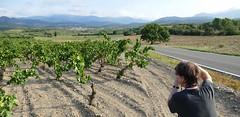 ESPOLLA - PAISATGE (Joan Biarnés) Tags: espolla altempordà empordà girona catalunya vinyas paisaje paisatge 270 panasonicfz1000
