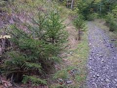 Wilderswil scenes 78 (SierraSunrise) Tags: switzerland wilderswil europe