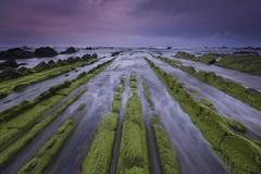 PIENSA EN VERDE (Rafael Díez) Tags: españa paisvasco vizcaya barrika mar paisaje filtro atardecer primavera verde musgo rocas rafaeldíez sunset nubes agua