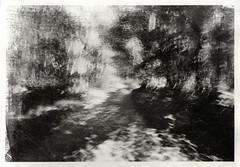 The Path (justin.syndercombe) Tags: film filmisnotdead darkroom liquidemulsion fomapan handmade kodak retinaiiic path blur longexposure