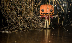 He went that a way!! (Dotsy McCurly) Tags: pumpkin arttoy fun cute grasses tabletop nikond750 nikon28300mmf3556 halloween scarecrow toy