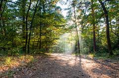 In the forest... (ZeGaby) Tags: alsace exposureblending forest foret nature naturephotography paysage pentax2470mm pentaxk1 ray sunlight sunset niedermorschwihr hautrhin france fr