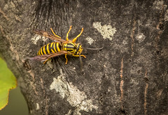 Wasp Need ID (1 of 1).jpg (weatherfordm25) Tags: mtmagazine places insects