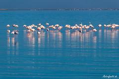 Flamingos Walvis Bay 2 (astrofan80) Tags: afrika atlantik flamingos meer namibia strand tiere urlaub vögel walvisbay erongo na