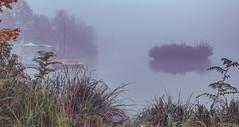 Insel Nebel (photon_de) Tags: dusk mist morning light lake long exposure fog atmosphere tree trees böblingen see nebel water nature park