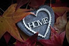 Home (ornella sartore) Tags: home cuore foglie colori particolari allaperto