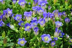 Flowers in October (jackfre 2) Tags: belgium antwerp flowers