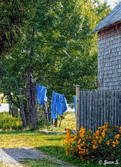 Les draps bleus (Jean S..) Tags: sheets fence flowers rural bloom house shed tree grass blue green
