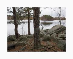 Sågudden, Falun 2018 (Karl Gunnarsson) Tags: g80 panasonic20mmf17 sågudden falun dalarna sweden sverige varpan forest trees pines birch lake rocks overcast letters carved painted carvings