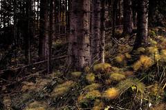colour (Karsten Höhne) Tags: alm alpen astberg bergdoktor berge berghütten bäume ellmau going hahnenkammbahn hartkaiserbahn hintersteinersee horngipfelbahn hornbahn kaiserjet kitzbühel kühe nebel oösterreich scheffau see seilbahn sessellift söll tiro wandern wiesen wilderkaiser lauwald