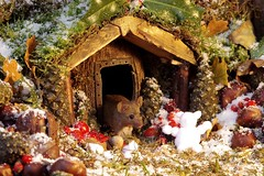 winter mouse in the snow christmas barn  (4) (Simon Dell Photography) Tags: mouse wild wildlife animal rodent cute funny awesome nature free snow christmas card scene display fruit apples moss nativity barn home log pile george simon dell photography sheffield photographer xmas festive winter autumn fall uk england