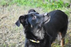 DSC_0169 (Listen2MeRawwr) Tags: dog doggie pup puppy black