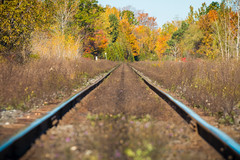 (A Great Capture) Tags: rail railroad train trains tack woods trees tree arbre forest wald árvore leaves leaf foliage autumnleaves outdoor outdoors outside vibrant colorful cheerful vivid bright eos digital dslr lens canon 70d natur nature naturaleza natura naturephotography naturethroughthelens light sun sunny sunshine sunlight colours colors colourful agreatcapture agc wwwagreatcapturecom adjm ash2276 ashleylduffus ald mobilejay jamesmitchell toronto on ontario canada canadian photographer northamerica torontoexplore fall autumn automne herbst autunno 2017 rouge urban national park