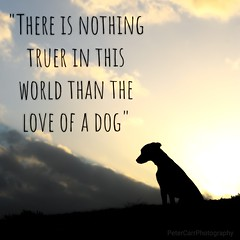 """""""There is nothing truer in this world than the love of a dog"""" (PeterCarrPhotography) Tags: dog dogs rip familysbestfriend puppy love missing"""