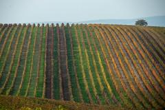 Moravian landscape (s_andreja) Tags: moravia landscape paysage nature field vineyard