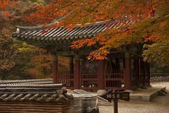 Korea:  Naejangsan Autumn (doug-craig) Tags: countries korea naejangsannaejansabaekyangsa asia travel stock nikon d700 color autumn journalism photojournalism dougcraigphotography leaves yourbestoftoday