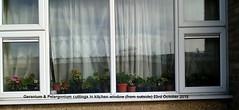 Geranium & Pelargonium cuttings in kitchen window (from outside) 23rd October 2018 (D@viD_2.011) Tags: geranium pelargonium cuttings kitchen window from outside 23rd october 2018