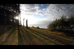* (Henrik ohne d) Tags: eos7d efs1022mm hoyapro1cirpl hitechnd09gradse landscape seascape cliffcoast shore shoreline woods ocean balticsea clouds sunset ghostforest nienhagen gespensterwald