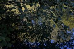 À travers bois (RarOiseau) Tags: parc vert charance gap hautesalpes reflet lac