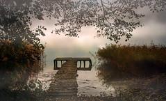 mist (augustynbatko) Tags: mist lake nature water sky trees pier leaves bridge
